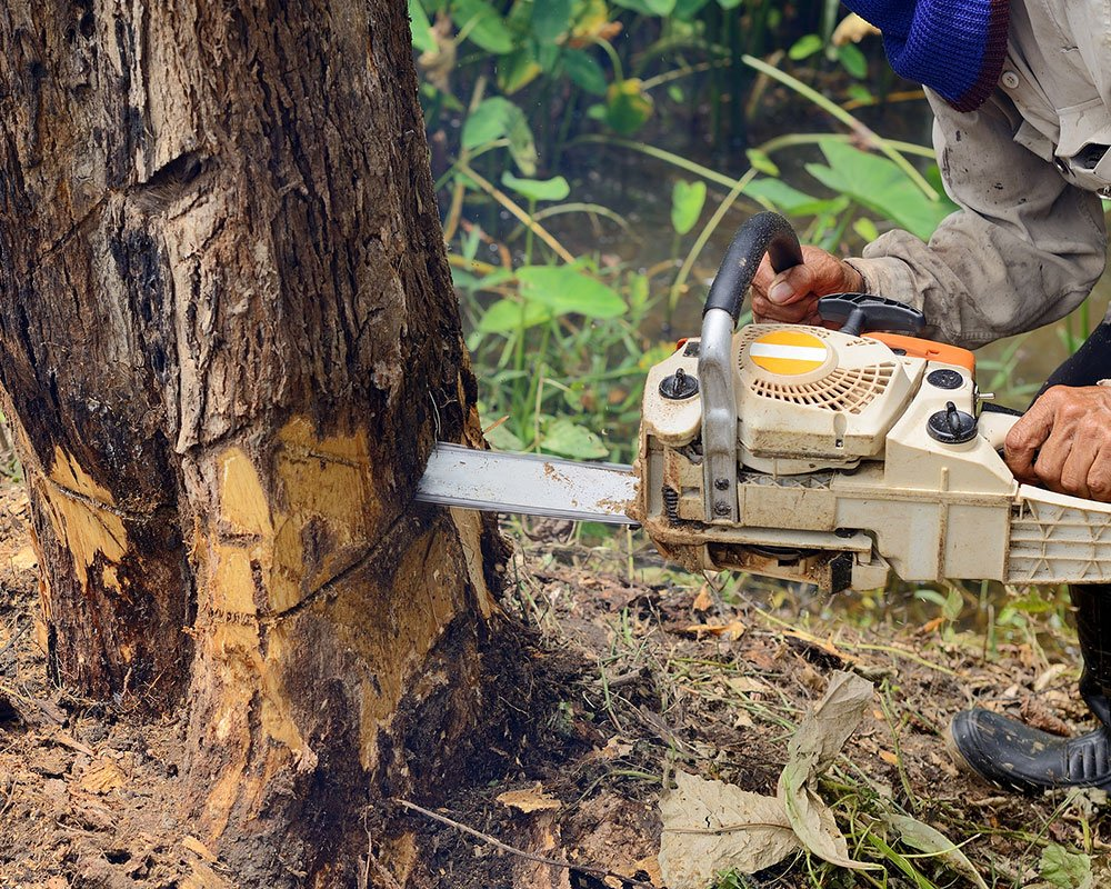 Tree Service Farmington - Tree Removal