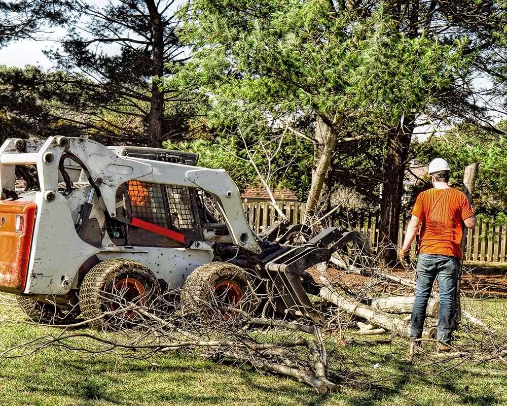 Tree Service Farmington - Arborist