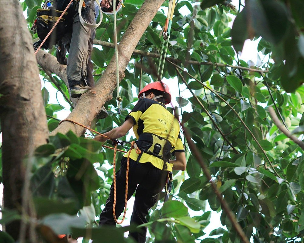 Tree Service Farmington - Emergency Tree Removal