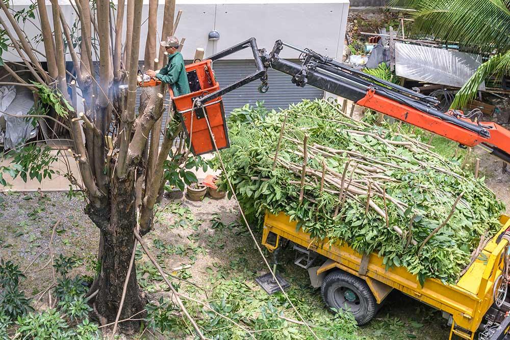 Tree Service Farmington - Tree Pruning