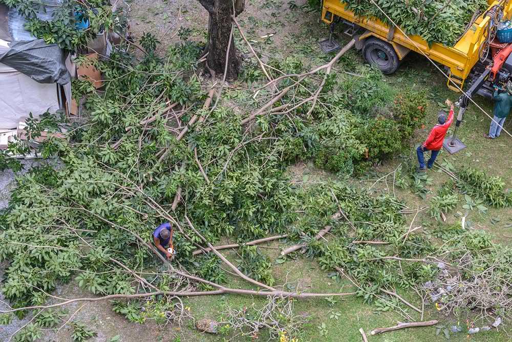 Tree Service Farmington - Tree Trimming